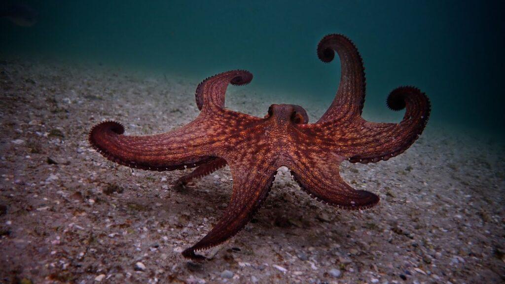 my-octopus-teacher-02