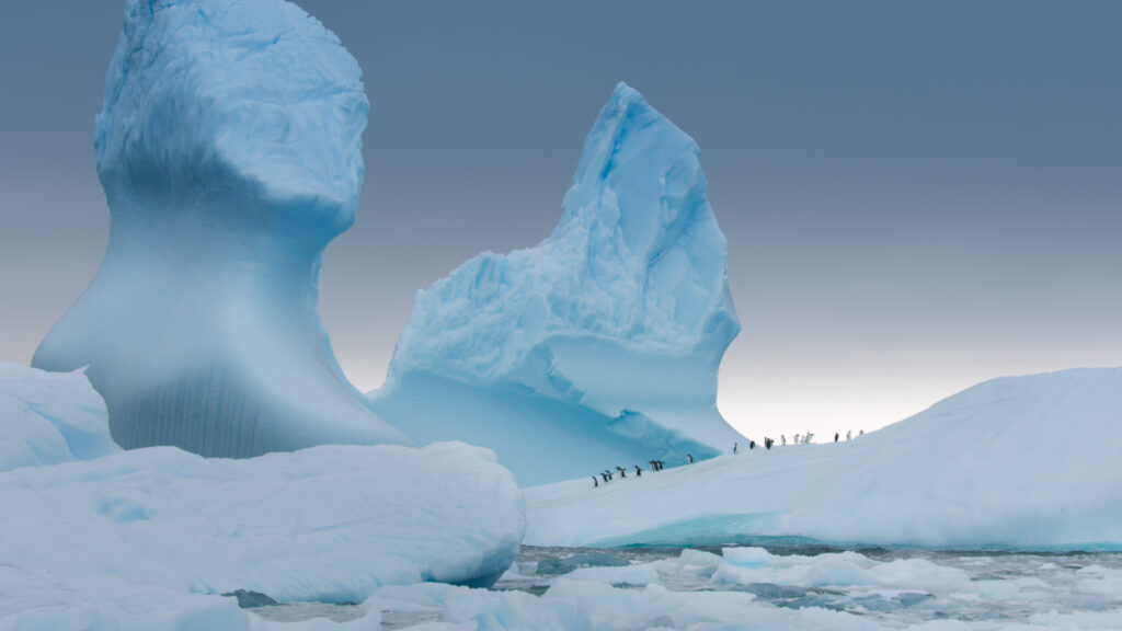Picture Shows: Screen grab. Gentoo penguins gather on an iceberg before heading out to sea to feed.