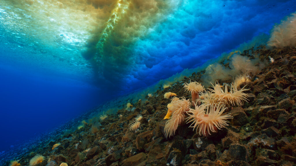 Picture Shows: Screen grab. Below the sea ice the water is a constant minus 2 degrees centigrade. The high concentration of salt in the water stops it from freezing, but in the cold creatures like these sea anemones grow very slowly and to an old age.