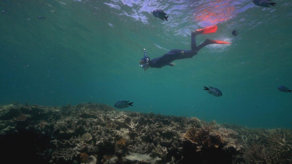 """SÜDWESTRUNDFUNK SCHAU IN MEINE WELT!, """"Sabyah kämpft! Gegen Kohleabbau"""", am Sonntag (20.06.21) um 20:30 Uhr. Die 11-jährige Sabyah sieht bei Tauchgängen, wie die Korallen des legendären Great Barrier Reefs vor der Küste von Queensland, Australien, immer mehr absterben. © SWR/Irja von Bernstorff, honorarfrei - Verwendung gemäß der AGB im engen inhaltlichen, redaktionellen Zusammenhang mit genannter SWR-Sendung bei Nennung """"Bild: SWR/Irja von Bernstorff"""" (S2). SWR Presse/Bildkommunikation, Baden-Baden, Tel: 07221/929-22202, foto@swr.de"""