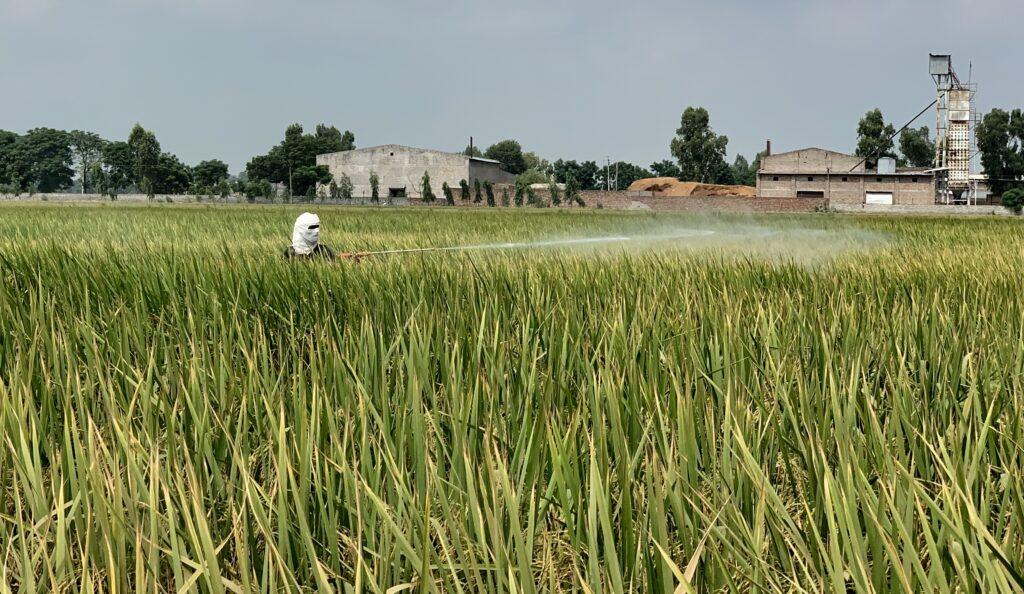 """SÜDWESTRUNDFUNK SCHAU IN MEINE WELT!, """"Gagan kämpft! Gegen Luftverschmutzung"""", am Sonntag (13.06.21) um 20:30 Uhr. Ein Bauer sprüht Pestizide in Punjab, Indien. Durch den massiven Einsatz von Chemikalien in der Landwirtschaft werden Luft und Boden verpestet. © SWR/Irja von Bernstorff, honorarfrei - Verwendung gemäß der AGB im engen inhaltlichen, redaktionellen Zusammenhang mit genannter SWR-Sendung bei Nennung """"Bild: SWR/Irja von Bernstorff"""" (S2). SWR Presse/Bildkommunikation, Baden-Baden, Tel: 07221/929-22202, foto@swr.de"""