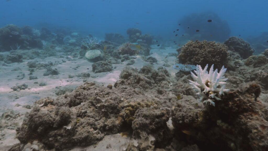 """SÜDWESTRUNDFUNK SCHAU IN MEINE WELT!, """"Sabyah kämpft! Gegen Kohleabbau"""", am Sonntag (20.06.21) um 20:30 Uhr. Das weiß strahlende Skelett einer sterbenden Koralle im Great Barrier Reef vor der Küste von Queensland, Australien. © SWR/Irja von Bernstorff, honorarfrei - Verwendung gemäß der AGB im engen inhaltlichen, redaktionellen Zusammenhang mit genannter SWR-Sendung bei Nennung """"Bild: SWR/Irja von Bernstorff"""" (S2). SWR Presse/Bildkommunikation, Baden-Baden, Tel: 07221/929-22202, foto@swr.de"""